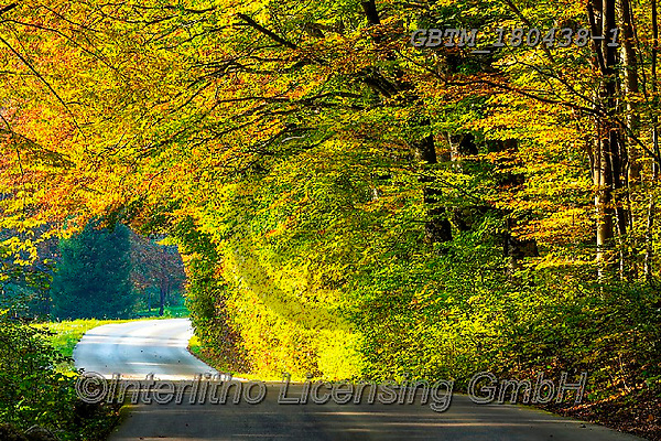 Tom Mackie, LANDSCAPES, LANDSCHAFTEN, PAISAJES, photos,+Croatia, Europa, Europe, European, Plitvice National Park, Tom Mackie, atmosphere, atmospheric, autumn, autumnal, color, colo+rful, colour, colourful, country lane, destination, destinations, dramatic outdoors, environment, environmental, fall, footpa+th, forest, horizontal, horizontals, landscape, landscapes, mood, moody, path, pathway, pathways, peace, peaceful, road, scen+ery, scenic, serene, serenity, tourist attraction, track, tranquil, tranquility, travel, wo,Croatia, Europa, Europe, European+,GBTM180438-1,#l#, EVERYDAY