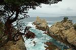 Northern CA Scenery