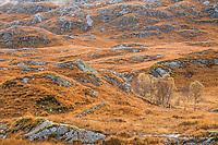 Pass near Glenfinnan, Scotland