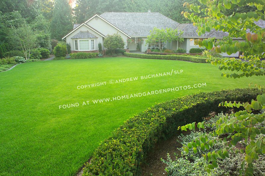 A lush green lawn and neatly clipped boxwood hedges front this suburban home in the Pacific Northwest near Seattle, while mature evergreen trees surround the edges of this property and filter the late afternoon summer sunlight.