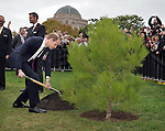 AUSTRALIA, Canberra : Britains Prince William plants an Aleppo Pine seedling derived from seeds gathered after the battle of Lone Pine at Gallipoli, Canberra on April 25, 2014. Britain's Prince William, his wife Kate and their son Prince George were on a three-week tour of New Zealand and Australia. AFP PHOTO / Mark GRAHAM