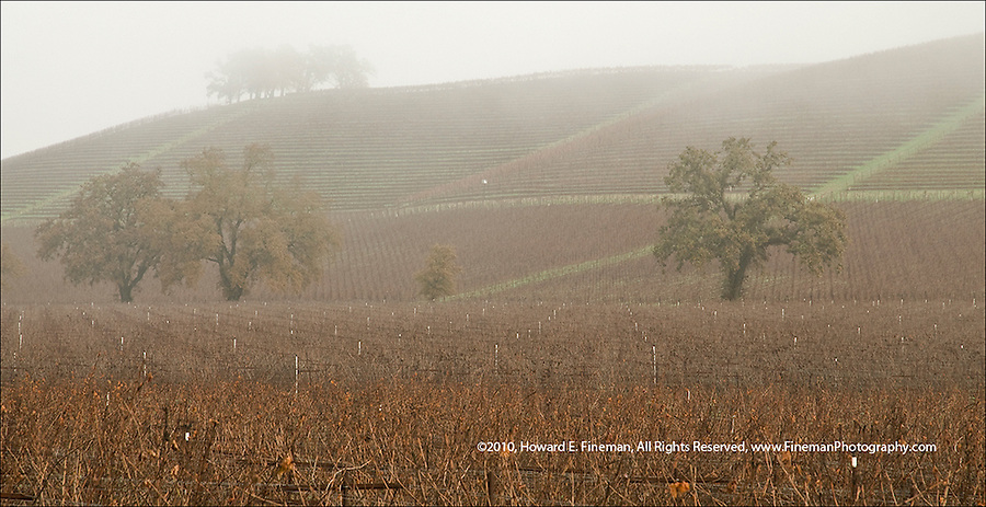 Fog rolling down hillside vineyards along Cal Rte 12 in Sonoma