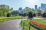 Spring in the Boston Public Garden, Boston, Massachusetts, USA