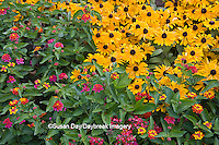 63821-20906 Patriot Cherry Lantana (Lantana camara 'Patriot Cherry')  Butterfly Red Pentas (Penta lanceolata), Tiger Eye Gold Rudbeckia (Rudbeckia hirta 'Tiger Eye Gold'),  Butterfly Garden at Cantigny Gardens, Wheaton, IL