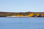 Beach, Falkland Island