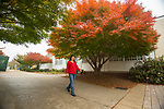 Qin Feng, principal research and development biologist at the NCNPR, takes a walk around campus to look at the fall colors. Photo by Kevin Bain/University Communications Photography