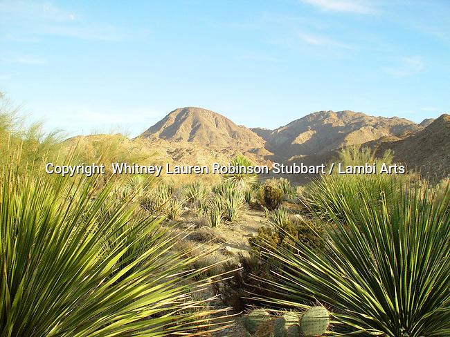 Breathtaking Scenic Photography California<br /> <br /> Joshua trees, palm desert, sunset coast, seals, coastline, <br /> Desert mountains, fault line, sunset, daytime,