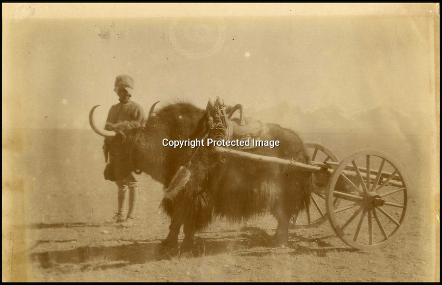 "BNPS.co.uk (01202 558833)<br /> Pic: HAldridge/BNPS<br /> <br /> ***Please Use Full Byline***<br /> <br /> Yak carts on the tibetan plateau.<br /> <br /> A collection of never-seen-before photographs taken during the controversial 1903 British Mission to Tibet has come to light.<br /> <br /> The rare snaps were taken by an officer during the campaign - the first time the British were given access to the country.<br /> <br /> They depict the haunting beauty of the secluded country and brought images of Tibeten landscapes including Mount Everest to the west for the first time.<br /> <br /> The set contains 140 sepia pictures of Tibetan buildings, people and soldiers, including a particularly poignant photograph of a British gunner manning a Maxim machine gun.<br /> <br /> Early in the campaign, troops gunned down 700 lightly armed Tibetan monks standing in their path in the infamous Massacre of Chumik Shenko.<br /> <br /> The slaughter was so brutal that Lieutenant Arthur Hadow, commander of the Maxim guns detachment, wrote afterwards: ""I got so sick of the slaughter that I ceased fire.<br /> <br /> ""I hope I shall never again have to shoot down men walking away.""<br /> <br /> The expedition began in December 1903 when around 3,000 troops marched into the country from India led by Colonel Francis Younghusband.<br /> <br /> It was initiated by Lord George Curzon, the Viceroy of India, to prevent Russia gaining influence in Tibet.<br /> <br /> They reach the capital Lhasa in August 1904, when the government signed a treaty effectively turning the country into a British protectorate.<br /> <br /> The photo archive is being sold by desecendents of one of the officers on the trip from southern England after languishing in a drawer for years.<br /> <br /> The collection is tipped to fetch 1,200 pounds when it goes under the hammer."
