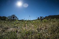 Noche de estrellas en sembrad&iacute;o de <br /> Rancho eco tur&iacute;stico El Pe&ntilde;asco en el pueblo Magdalena de Kino. Magdalena Sonora. <br /> &copy;Foto: LuisGutierrrez/NortePhoto