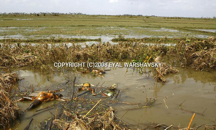 Human bodies lies in the water after  Cyclone Nargis hits Irrawaddy Division, May 10, 2008. Despairing survivors in Myanmar awaited emergency relief on Friday, a week after 100,000 people were feared killed as the cyclone roared across the farms and villages of the low-lying Irrawaddy delta region. The storm is the most devastating one to hit Asia since 1991, when 143,000 people were killed in neighboring Bangladesh. Photo by Eyal Warshavsky  *** Local Caption *** ëì äæëåéåú ùîåøåú ìàéì åøùáñ÷é àéï ìòùåú áúîåðåú ùéîåù ììà àéùåø