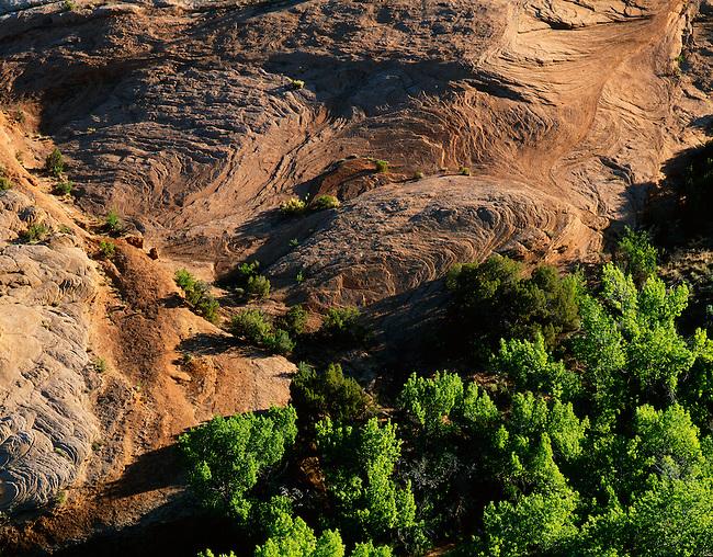 Petrified sand dunes; cottonwoods; Arches National Park, Utah