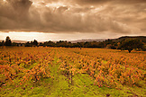 USA, California, Sonoma, vineyard landscape with a stormy cloudy sky, Bartholomew Park winery and vineyard