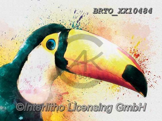 Alfredo, REALISTIC ANIMALS, REALISTISCHE TIERE, ANIMALES REALISTICOS, paintings+++++,BRTOXX10484,#a#, EVERYDAY