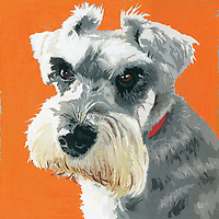 Painting of Miniature Schnauzer dog