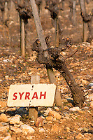 A syrah vine and sign at La Truffe de Ventoux truffle farm, Vaucluse, Rhone, Provence, France