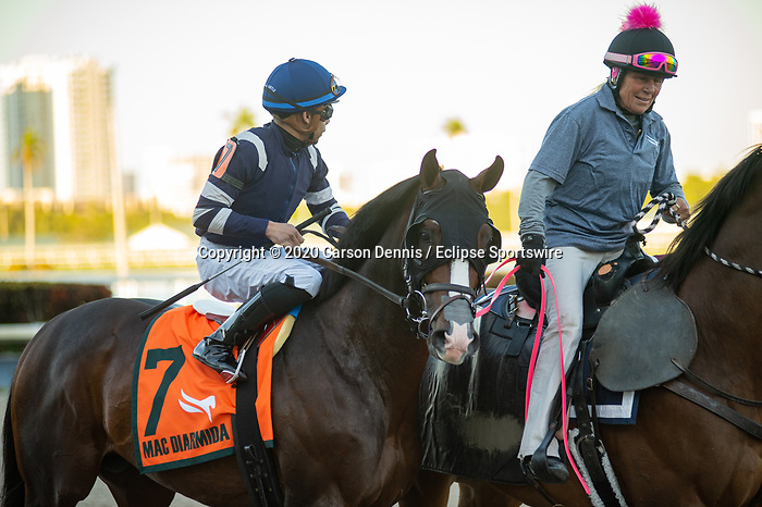 February 29, 2020: #7, ADMISSION OFFICE returns to the turf a runner up for Trainer Bryan Lynch in the $200,000 Grade II Mac Diarmida Stakes at Gulfstream Park on February 29, 2020 in Hallandale Beach, FL. (Photo by Carson Dennis/Eclipse Sportswire/CSM)