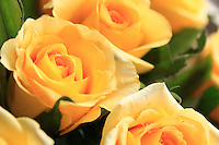 Stock photo of stunning yellow roses bunch.