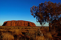 Composite - AYERS ROCK AND KANGAROO, AUSTRALIA