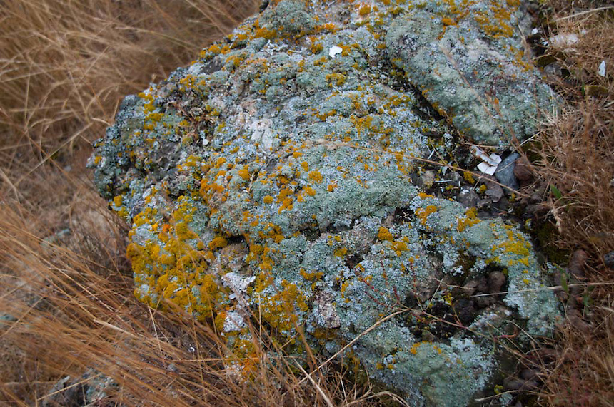 Lichens on Rock at Horton's Hook, Shaw Island, Washington, US