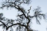 Tree silhouette.