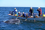 Touching Gray Whale