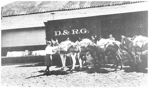 Burros unloading ore at Lake City.<br /> D&amp;RG  Lake City, CO