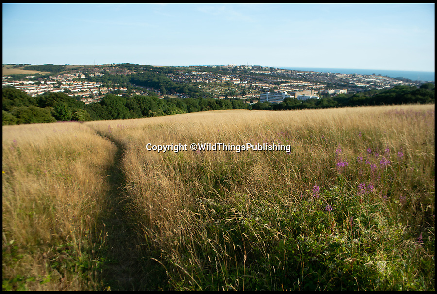 BNPS.co.uk (01202 558833)<br /> Pic: WildThings/BNPS<br /> <br /> Hollingbury hillfort near Brighton.<br /> <br /> Walk back in Time - new travel book reveals Britain's ancient places.<br /> <br /> An explorer has travelled the length and breadth of Britain to document over 400 mysterious little known ancient sites.<br /> <br /> Dave Hamilton ventured off the beaten track to uncover wild ruins which have stood for between 2,000 and 10,000 years.<br /> <br /> He avoided famous sites like Stonehenge, instead focusing on little-known lost ruins scattered across the country.<br /> <br /> His travels saw him encounter sacred tombs and caves, stone circles, Bronze Age brochs and Iron Age hillforts.