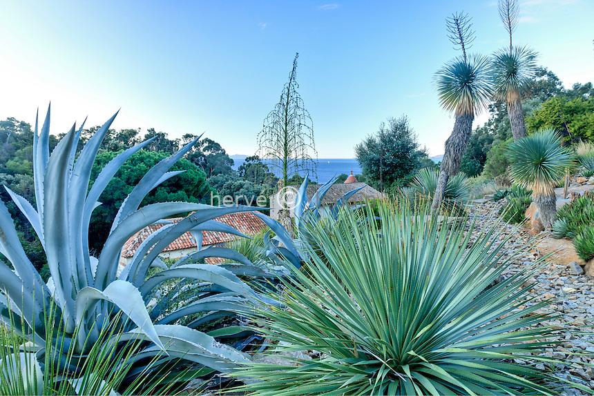 Domaine du Rayol en novembre : le jardin d'Amérique aride, agaves, Dasylirion et Yucca rostrata, hampe florale de Fucrea et sur les 2 Yucca rostrata