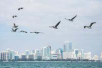 US Sailing Team Miami Camp