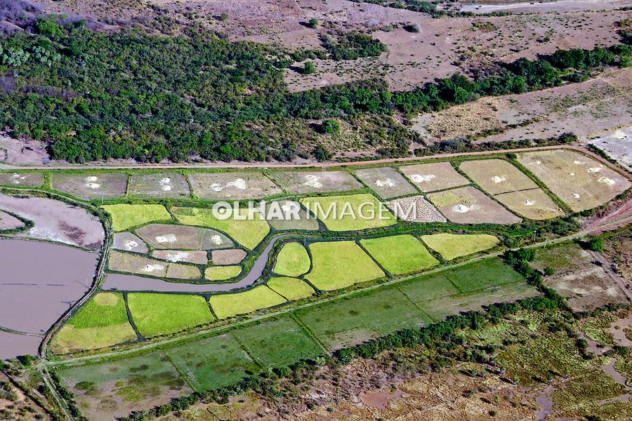 Plantaçao de arroz no municipio de Joaquim Pires. Piaui. 2010. Foto de Zog Koch.