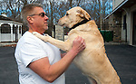 BETHANY,  CT-122816JS06--Marc Gerte plays with his 5-year-old Yellow Lab Jamie Lee on Wednesday. Gerte recently won a court battle alleging that was dog was taken by the Naugatuck Police and given away. <br /> Jim Shannon Republican-American