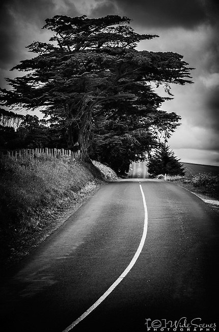 A lonely road near the town of Wynyard on the north coast of Tasmania in Australia.
