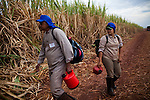 ITUMBIARA, BRAZIL - OCTOBER 16:<br /> Sugarcane field workers get ready for harvest in sugarcane fields, near the city of Itumbiara, in Goias state, Brazil, on Wednesday, Oct. 16, 2013. Since the US recently passed a number of regulations and standards for cars and dropped tariffs that were in place for decades against Brazilian sugar, Brazilian ethanol is now flowing to the U.S., and the ethanol industry in the country is consolidating and ramping up for a new era.