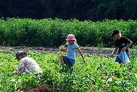 Intervale Community Farm, Burlington, Vermont