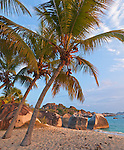 Virgin Gorda, British Virgin Islands, Caribbean <br /> Palm trees lean out towards the beach on Spring Bay at sunset, Spring Bay National Park