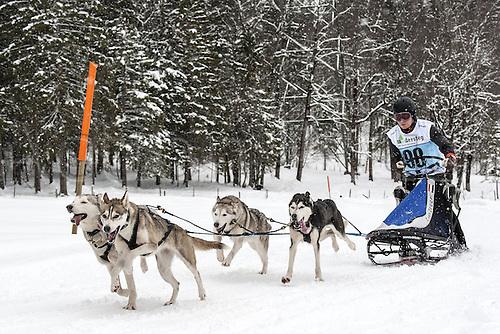 20.02.2016. Kandersteg, Bern, Switzerland. Swiss dog-sled championships.  Amo van Zoggel (NED)