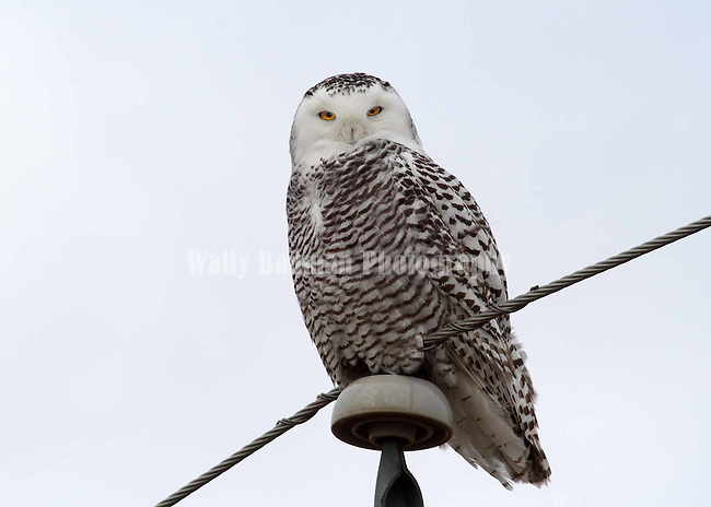 Birds of North America,<br />