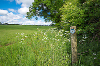 Conservation headland, private no right of way - Norfolk, May