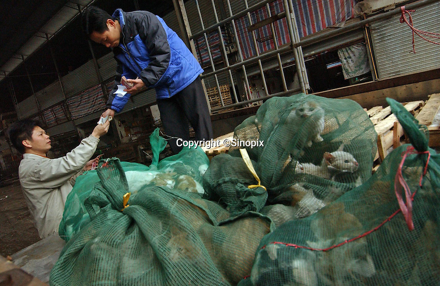 """Are transaction of kittens Kkttens are held in a mesh bags is completed at a market in Guangzhou, China,  that specialises in selling """"live cat meat"""".  The cold winter and the prosperity of the Chinese has resulted in a shortage of the meat that is growing in popularity.  Younger cats are being sold and even kittens are sold by the bag. Large cats are sold for 9 RMB per kilo, smaller cats for 6 RMB per kilo and kittens for just 4 RMB per kilo.<br /> 11-Mar-05"""