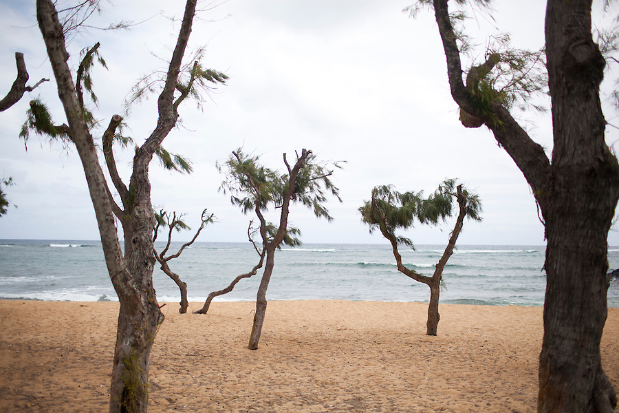 Trees growing out of a beach at Waimea State Recreation Pier, Waimea, HI
