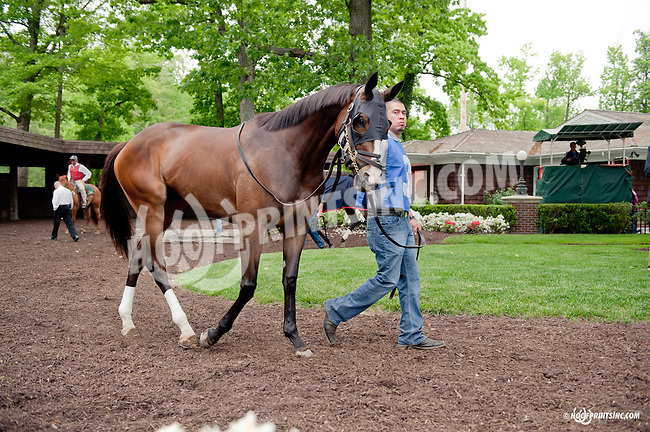 Giant Cats Eyes before The Our Mims Stakes at Delaware Park on 5/18/13