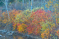 Autumn colors along the  Kaministiquia River<br />