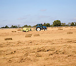 Tractor harvesting hay in field, Hollesley, Sufolk, England