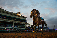 HALLANDALE BEACH, FL - JANUARY 27: Toast of New York with Frankie Detorri at the Pegasus World Cup Invitational at Gulfstream Park Race Track on January 27, 2018 in Hallandale Beach, Florida. (Photo by Alex Evers/Eclipse Sportswire/Getty Images)