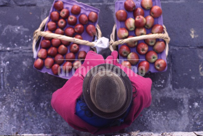 Una mujer indigena vende manazanas en la ciudad.+fruta comercio *Indigenous woman selling apples in Quito +fruit. trade  *Une femme indigène vend des pommes dans la ville de Quito. +travail, femme, commerce, fruit, économie