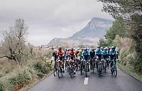 cruising peloton through the Mallorcan landscape<br /> <br /> Trofeo Lloseta - Andratx: 140km<br /> 27th Challenge Ciclista Mallorca 2018