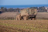 Harvsting sugar beet  - Norfolk, February