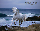 Bob, ANIMALS, collage, horses, photos(GBLA688,#A#) Pferde, caballos