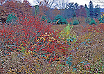 Overcast day in late fall along a hedgerow in the Poconos, Pennsylvania