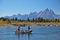 Fly-fisherman, Snake River, Grand Teton National Park, Jackson Hole, wyoming
